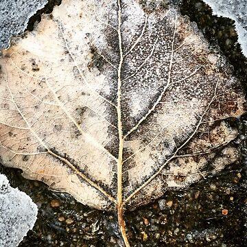 The Leaf  by Kaitbrooks35