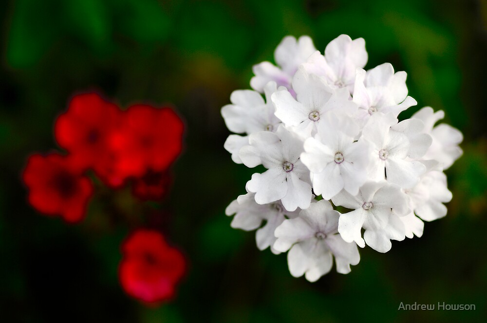 Flower image by Andrew Howson