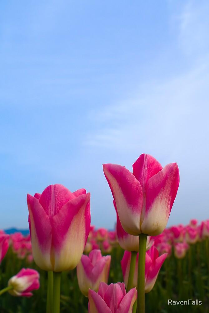 Skagit Valley Tulips by RavenFalls