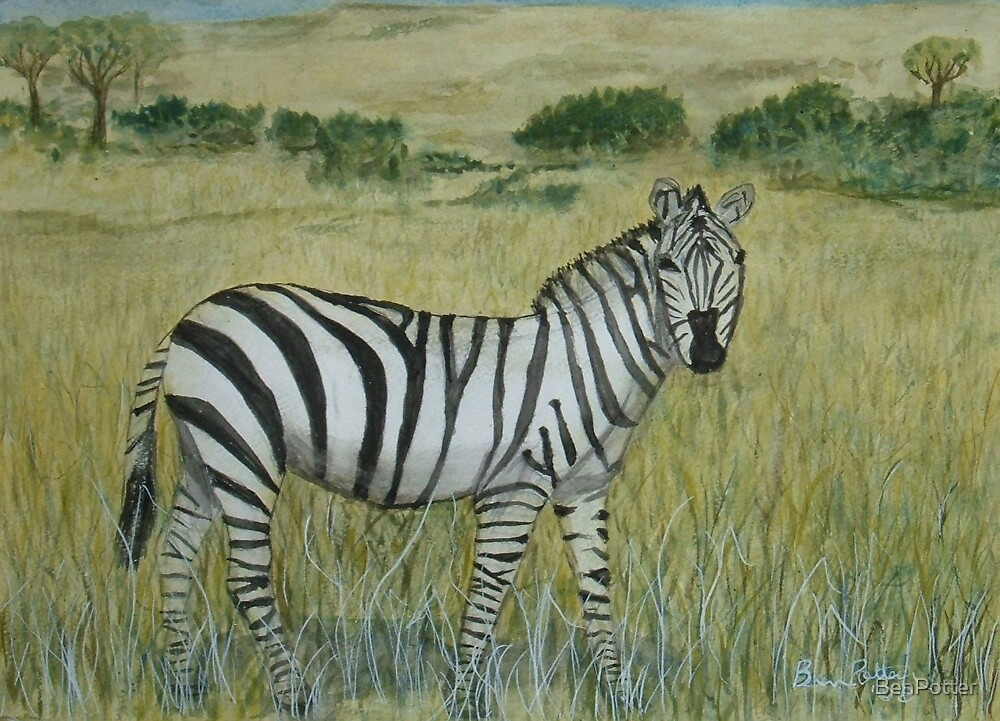 Savanna Zebra by BenPotter