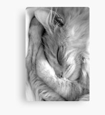rocky sleeping Canvas Print