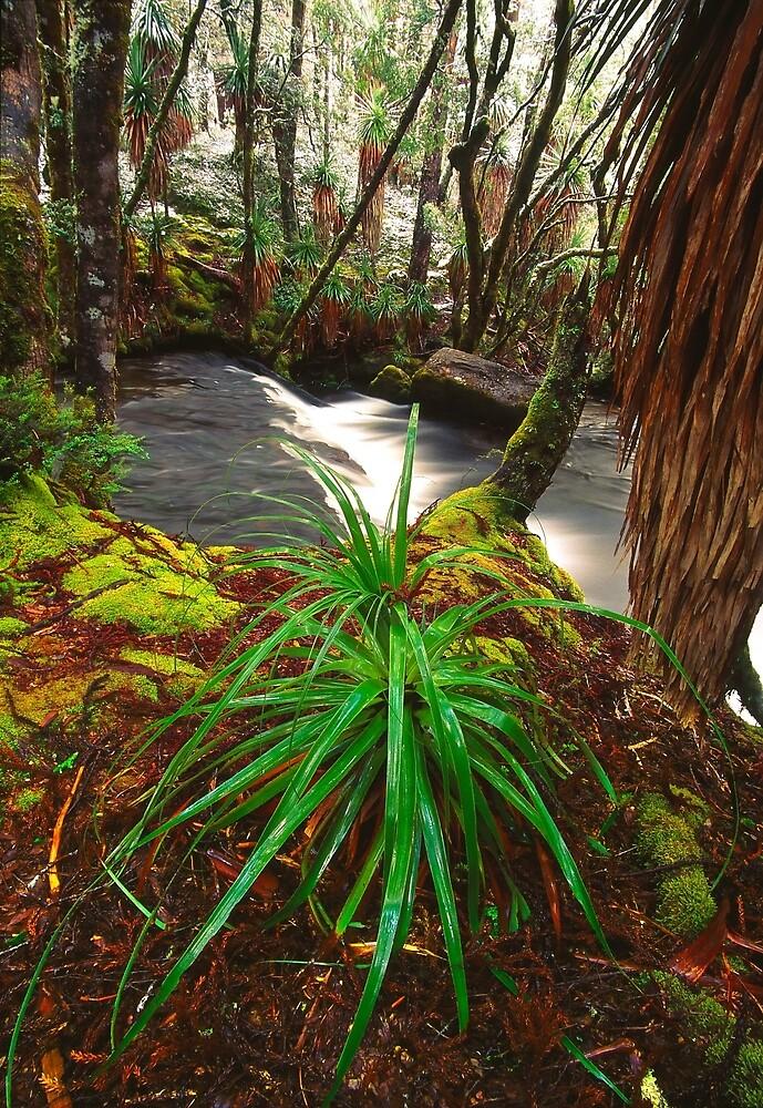 Pine Valley in winter, Tasmania by Kevin McGennan
