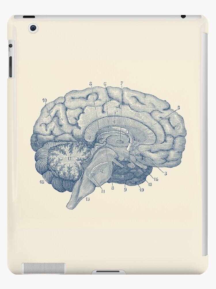 Bonito Diagrama Del Cerebro Humano Regalo - Anatomía de Las ...