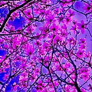 Donna's Purple Magnolia 8804 by Candy Paull
