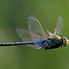 Dragonfly by Marvin Collins