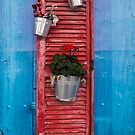 Decorative Red Shutter by Rae Tucker