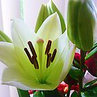 Easter Lily - Easter Gift by EdsMum