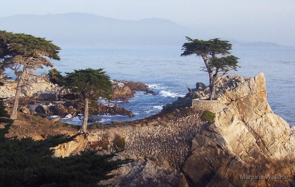Lone Cypress at sundown by Marjorie Wallace