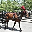 Street Horse by terrebo
