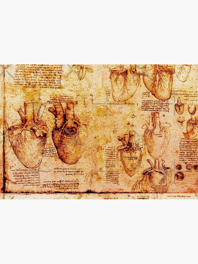 Herz und seine Blutgefäße, Leonardo Da Vinci Anatomy Drawings, Brown von BulganLumini