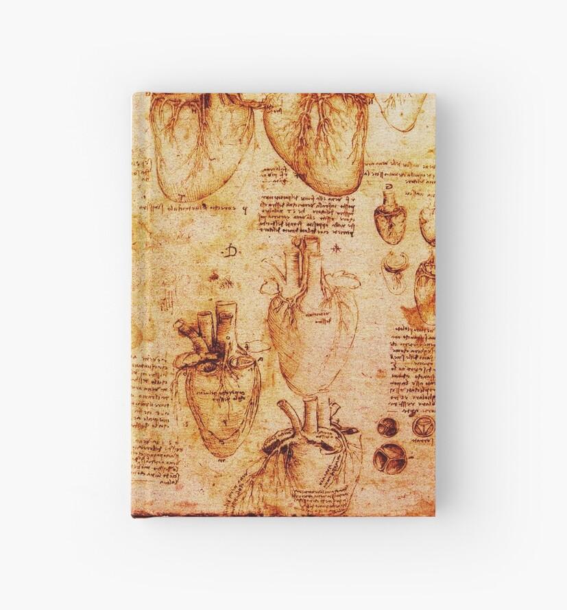 Heart And Its Blood Vessels Leonardo Da Vinci Anatomy Drawings