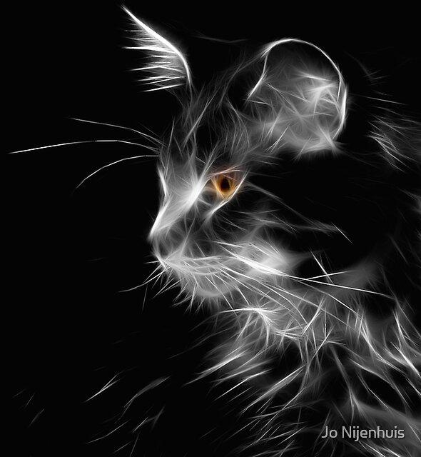 Cat By Night by Jo Nijenhuis