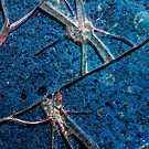 Very Distressed Gothic Grunge Shattered Glass Close Up Abstract by Shelly Still