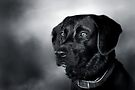 Black Lab Portrait - in Black & White by Renee Dawson