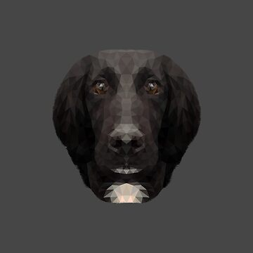 The Springer Spaniel by petegrev