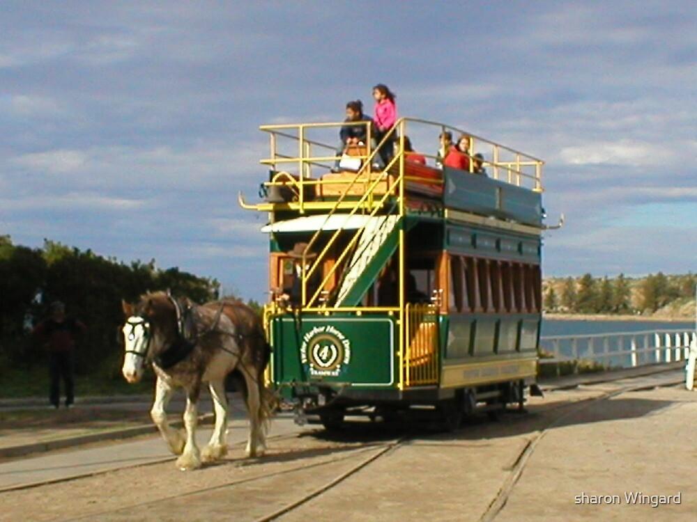horse drawn tram by sharon wingard
