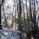 Forest Sun Rays in the Snow #31 by Dawna Morton