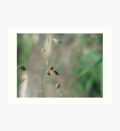 Love Grass Flower (Eragrostis) Art Print