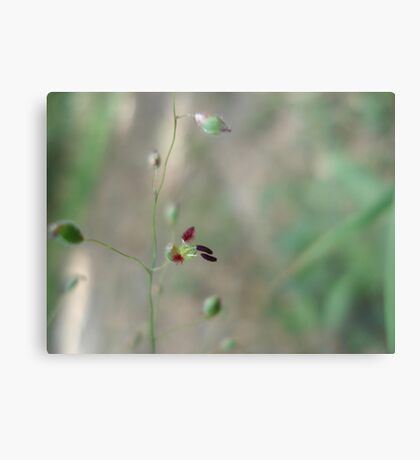 Love Grass Flower (Eragrostis) Metal Print