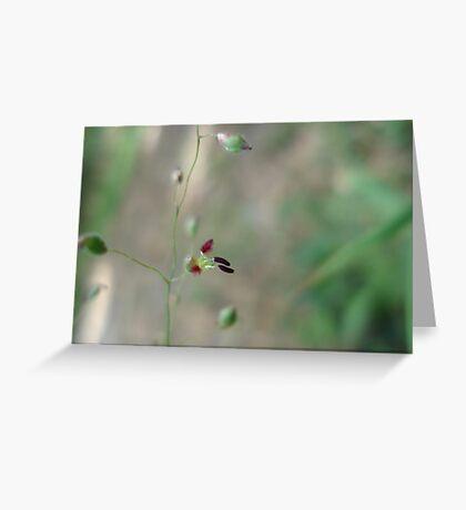Love Grass Flower (Eragrostis) Greeting Card