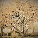 The Cherry Tree by Fara
