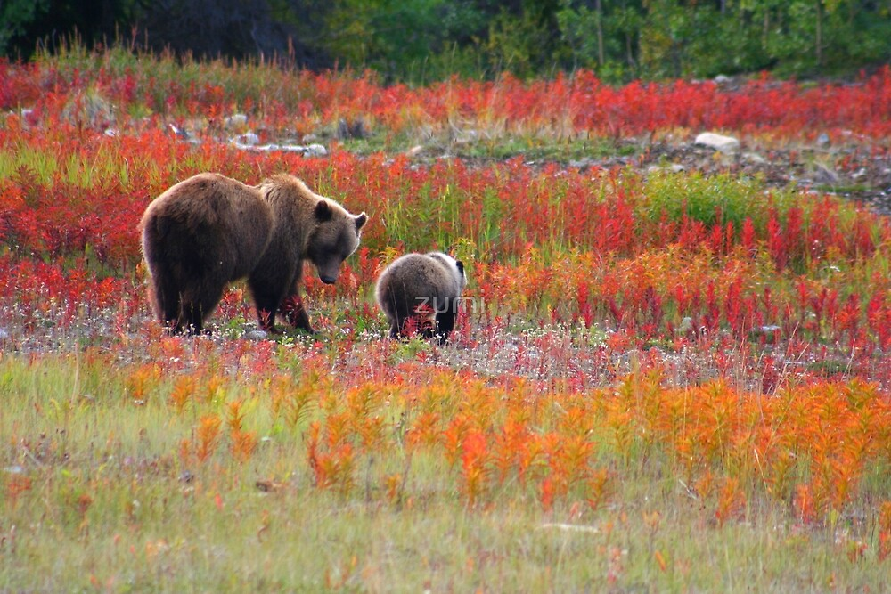Grizzly family by zumi