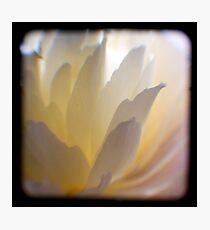 white petals ttv Photographic Print