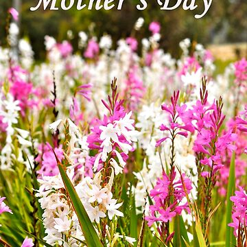 Happy Mother's Day by cozmist