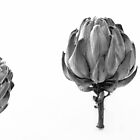 ARTICHOKE BLACK AND WHITE by Thomas Barker-Detwiler