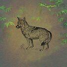 Coyote by David Dehner