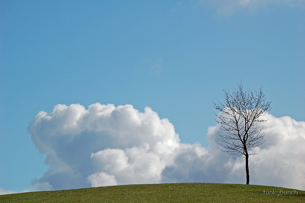 Lonely Tree by funkybunch