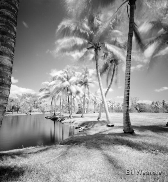 Palm Glade by Bill Wetmore
