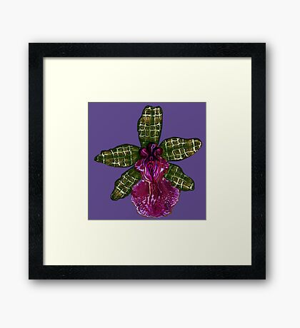 Pinque and Purrple Framed Print