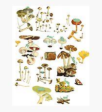 Feline Fungus! Photographic Print