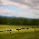 Barb Wire by Christopher Bookholt