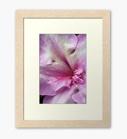 Azaleas Heart Framed Print