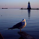 Posing Seagull by JimmyTNT