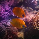 Two Masked Butterflyfish The Creative Way by hurmerinta