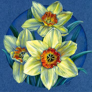 Daffodils - the joys of spring  by sarahtrett