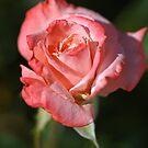 Romancing Rose by Joy Watson