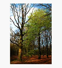 That one, that first green beech-tree! Photographic Print