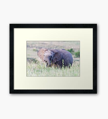 Late afternoon snack Framed Print