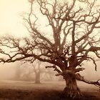 Mighty Old Oak in fog by heidiannemorris