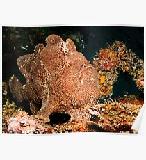 Frogfish Poster