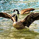 Canada Geese At Detroit River by Barry W  King