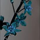 Blue Flower by dedakota