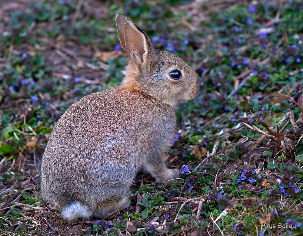 Easter Bunny by Krys Bailey