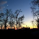 Silhouetted Trees by Lynn Gedeon