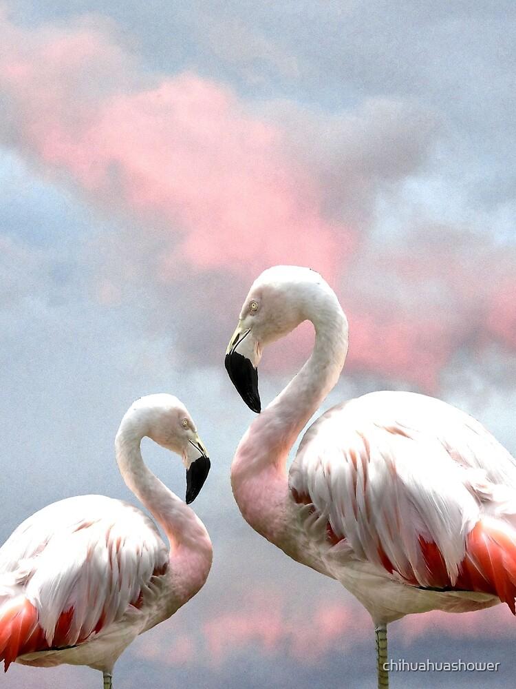 Flamingo Sky sunset birds by chihuahuashower