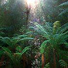 Rainforest Reflection by Tony Waite